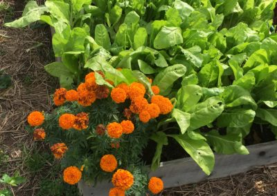 LCR's Food Pantry Garden